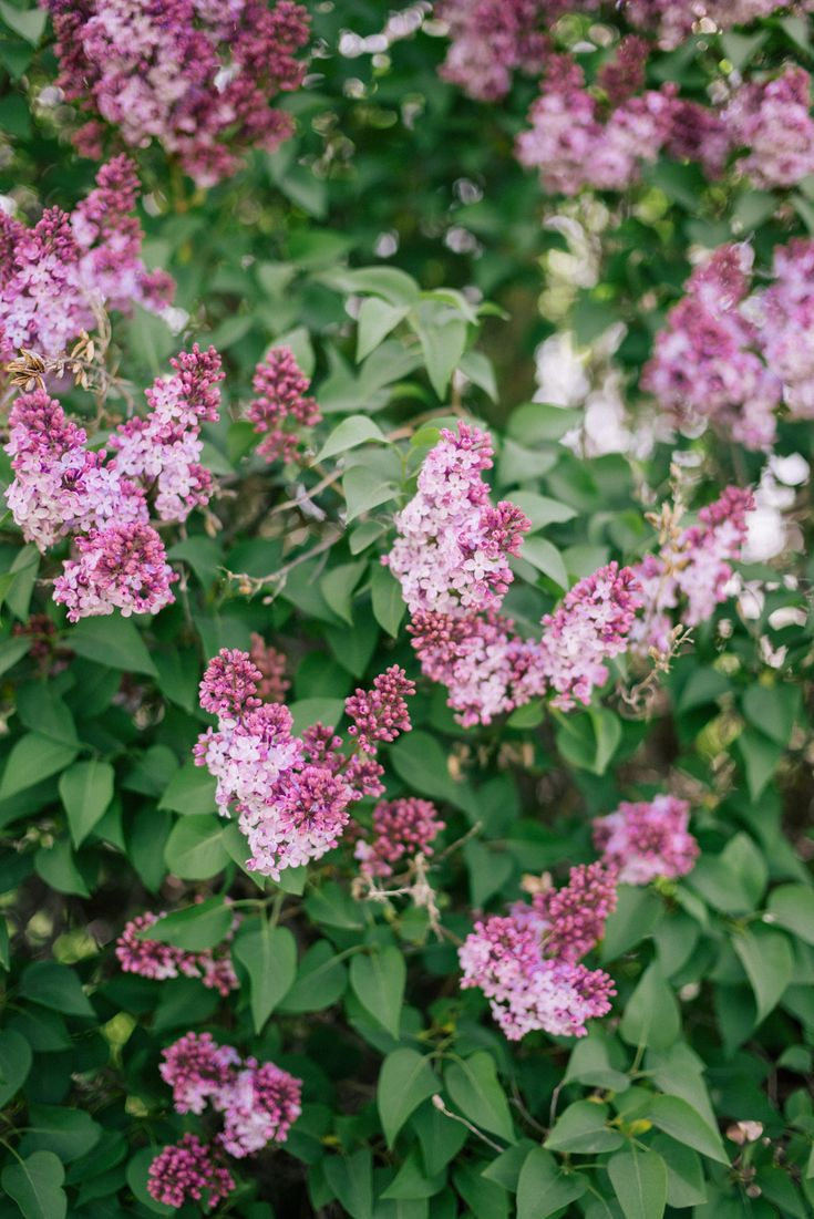 Gal Meets Glam Lilac Season