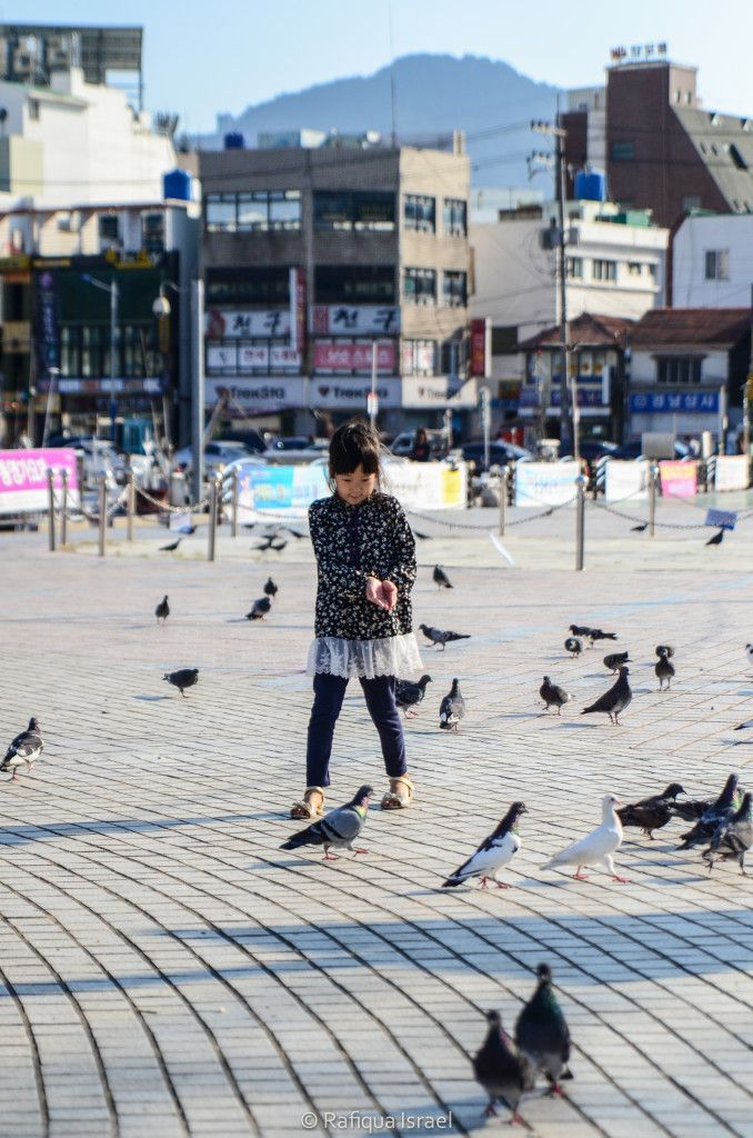 Playing with the birds at Tongyeong Port, South Korea #travel #landscape #asia