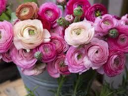 Risultati immagini per fiori