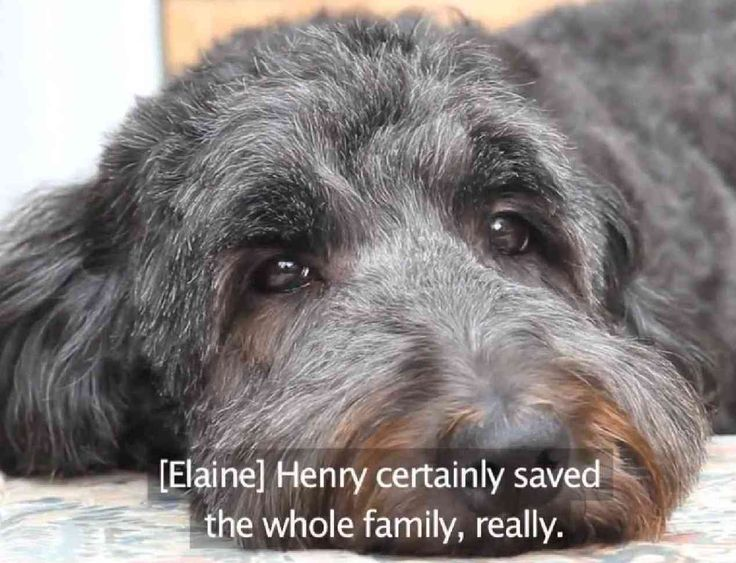 Animal Heroes: Henry The Hearing Dog  ... from PetsLady.com ... The FUN site for Animal Lovers