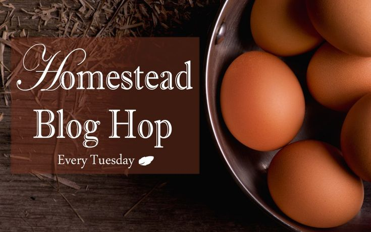Join in the Homestead Blog Hop and share your  posts with fellow homesteaders. How to market your homestead blog!