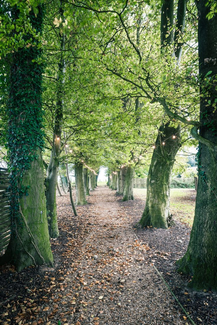 Avenue of trees Crown Lodge Kent