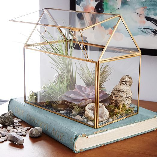 Home grown. Our Display Box Terrariums are great for showcasing air plants, cacti or even your favorite decorative objects. Make a living diorama for your dresser or a conversation piece for your countertop.