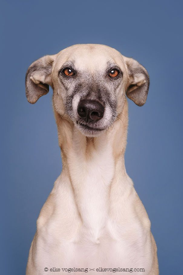 """German photographer Elke Vogelsang (aka Wieslblitz) has a knack for capturing expressive portraits of our canine friends. Last year, we shared their goofy personalitiesin a series of delightful images. Now, Vogelsang has pivoted from their playfulness and explores pups' skeptical side. Her latest series features """"dogs questioning the photographer's sanity,"""" as they grimace, roll their …"""