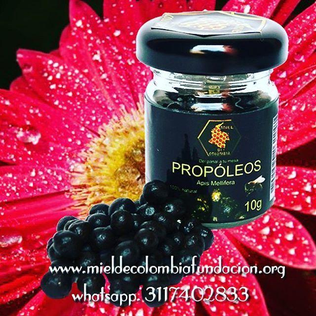 Se han aislado en el propóleo más de 180 compuestos. Los componentes más estudiados son los polifenoles y flavonoides, ácidos fenólicos y ésteres, compuestos terpénicos, sesquiterpénicos, aceites  esenciales y vitaminas. Los polifenoles y flavonoides más conocidos son crisina, galangina y quercitina. Otras sustancias aisladas en el própolis son cumarinas, ácido benzoico y caféico y oligoelementos. Propiedades terapéuticas de propóleo Bacteriostático y bactericida: sin duda el propóleo es un…