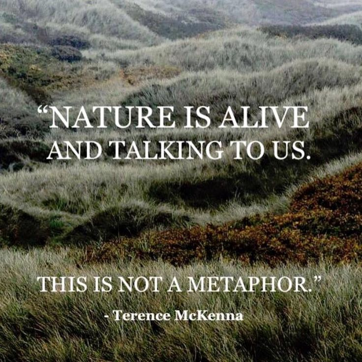 25+ Best Mother Nature Quotes On Pinterest