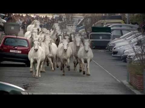 TransHumance - Teaser ©Théâtre du Centaure - YouTube
