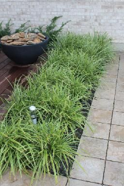 32 best our projects images on Pinterest Outdoor living Grasses