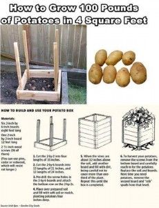 Build Your Own Potato Growing Box thesurvivalistblog.net