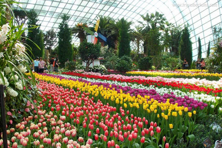 Tulipmania - Gardens by the Bay Flower Dome Singapore