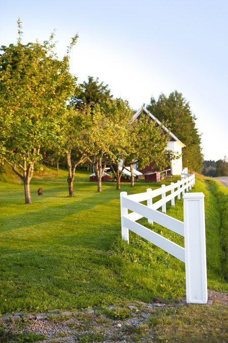 Vitt staket / white fence