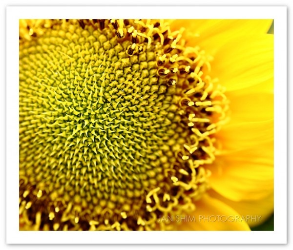 In pursuit of happy sanity. What is happiness without sanity?: Happy Sanity, Sunflowers, 3Rd Wedding Anniversary, Summery Things