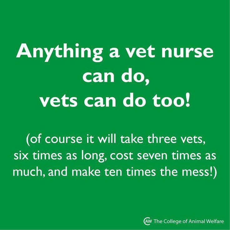 Best Registered Veterinary Technician Images On
