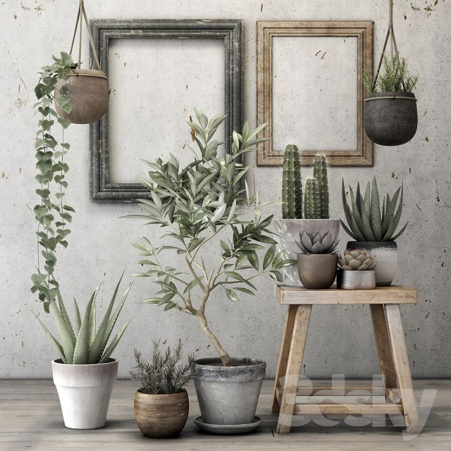 Decorative plant set