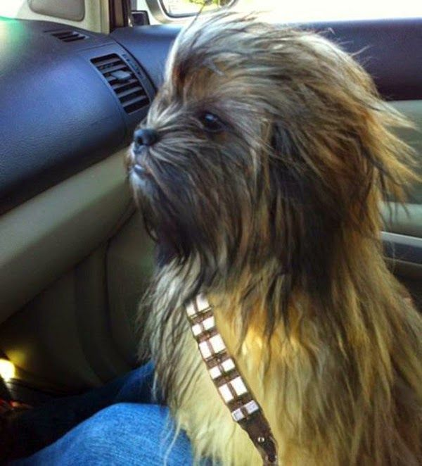 The Best of Halloween Costumes 2014: Funny Halloween Costume Ideas for Dogs
