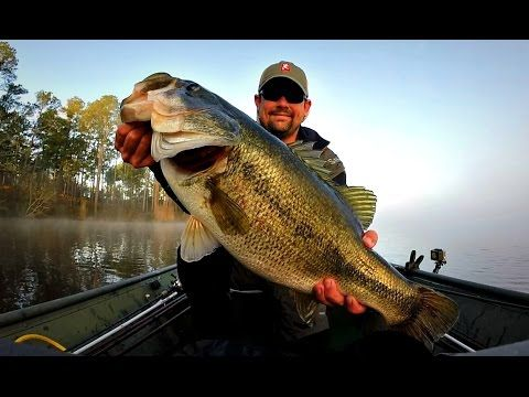 17 best images about bass fishing on pinterest | lakes, world, Soft Baits