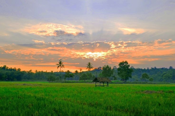 landscape nature grass horizon cloud sky sunrise sunset field meadow prairie sunlight morning hill dawn dusk evening pasture agriculture savanna plain fields grassland indonesia habitat afterglow rural area paddy field natural environment geographical feature atmospheric phenomenon grass family lampung