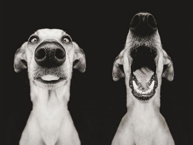 retratos-expressivos-de-cães-14