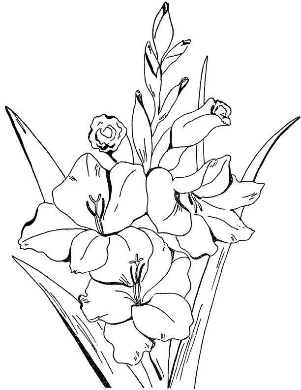 Adult Flowers Coloring Page Gladiolus botanical