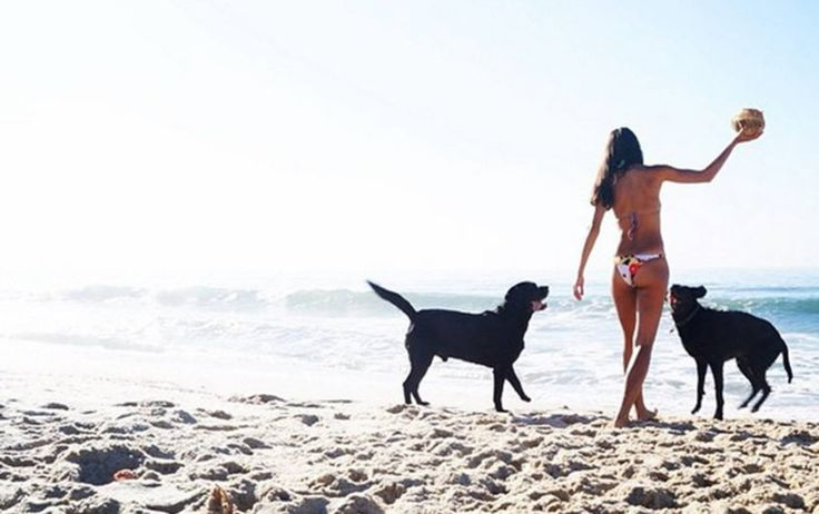 Fact is, dogs also experience FOMO. To help you prevent it, we've pulled rounded up the best dog beaches on the Sunshine Coast, so no-one misses out.