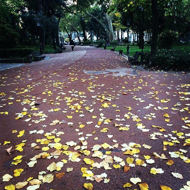 #outono #fall #jardimdaestrela #lisboa #lisbon #inspiration #inspiração #lovenature