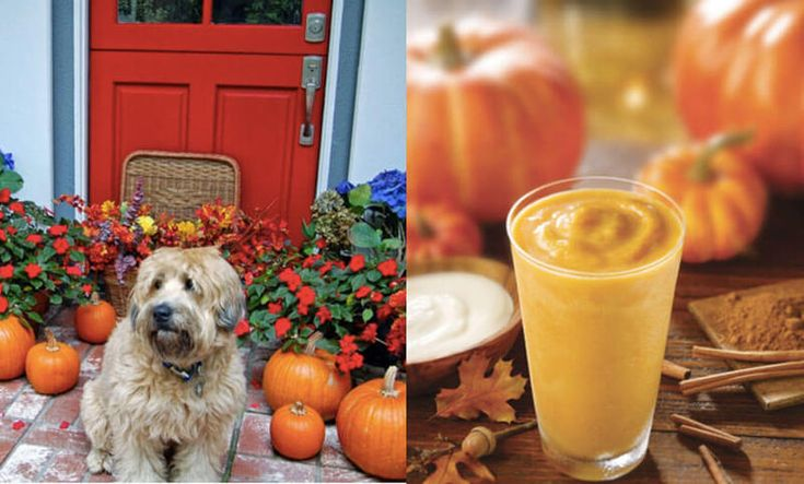 Осенний смузи: тыква, корица и кайенский перец