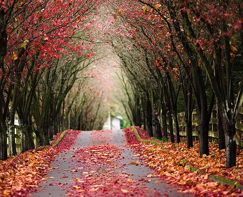.: Fall Leaves, Trees Tunnel, Country Roads, States Parks, Driving Way, Old Cars, Autumn Trees, Autumn Photography, Frou Frou