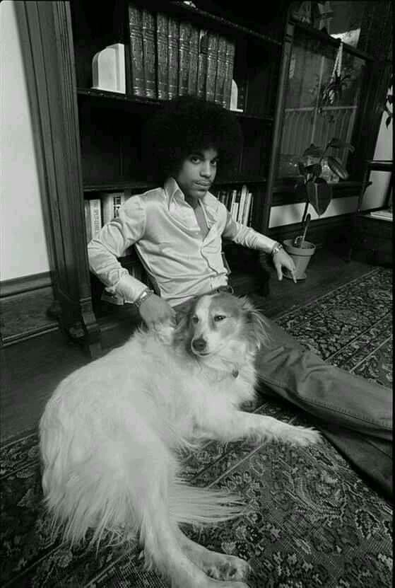 Prince Rogers Nelson                                                       …
