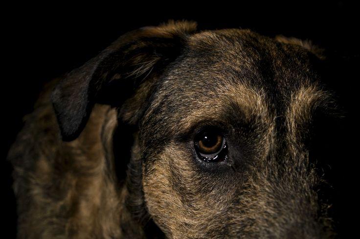 Photoshoot with my dog Rollo / Sesión con mi perro Rolo