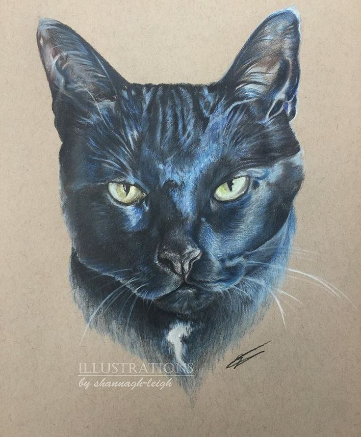 """""""Baby Kitty"""" traditionally drawn in Caran d'ache supracolor on strathmore tone tan (9"""" x 12"""") comments and critique appreciated as always   #art #artist #artwork #artoftheday #artistsoninstagram #draw #drawing #drawsomething #art_realism_ #drawingaday #drawnbyme #animalart #animal #cat #catportrait #catart #catartist #catdrawing #perportrait #pet #commission #commissionedart #artlife #colour #colouredpencil #art4small #art_realism_ #cp_art"""