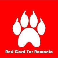 The Romanian Dog Massacre Begins. Huffington Post