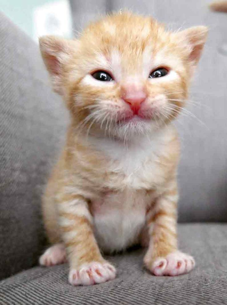 5 Orphaned Ginger Kittens Get Help Just in Time Cats
