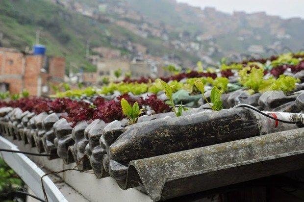 Un proyecto que pretende convertir las azoteas de las casas humildes en efectivos huertos urbanos.