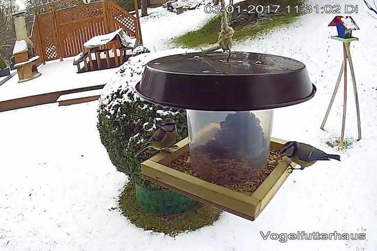 Die Winterzeit ist auch die Zeit in denen die Vögel besonders dankbar für aufgehängte Futterhäuschen sind. Erst kürzlich habe ich hier ja eine kleine Bauanleitung für ein Vogelfutterhaus veröffentlicht. Nun ist es aber so, dass nicht jeder Lust hat mehrere Stunden in der Werkstatt an einem Futterhaus zu basteln.Daher hier noch mal eineVariante die sich […]
