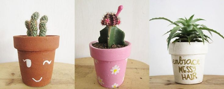 Kado Ultah Kaktus Mini