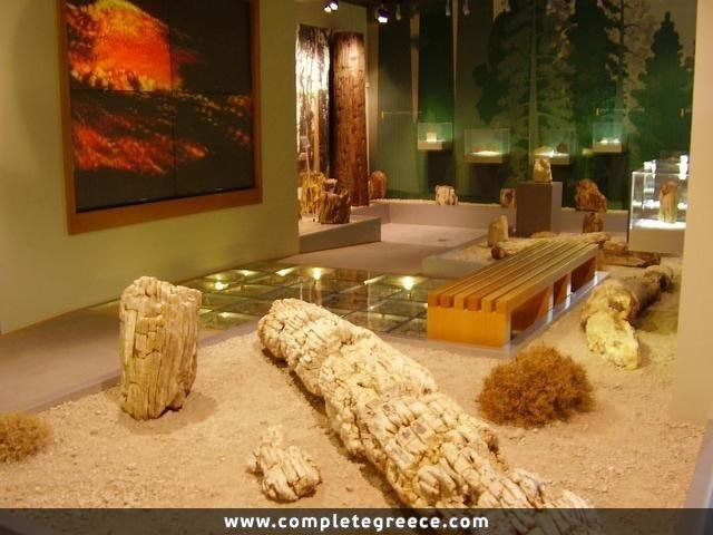 Natural History Museum of Lesvos - Sigri - Lesbos - #Greece