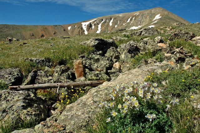 All About Mount Elbert: Colorado's Highest Mountain: Columbines, the Colorado state flower, line the trail up Mount Elbert, Colorado's highest mountain.