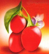 goji fruit,baie de goji, goji, lycium