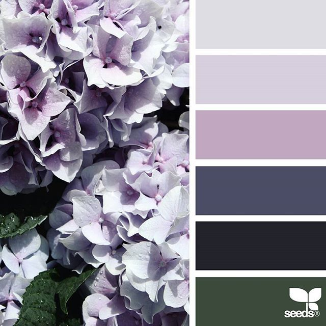 today's inspiration image for { flora hues } is by @saffronandsuitcases ... thank you, Ruth, for sharing your gorgeous photo in #SeedsColor !