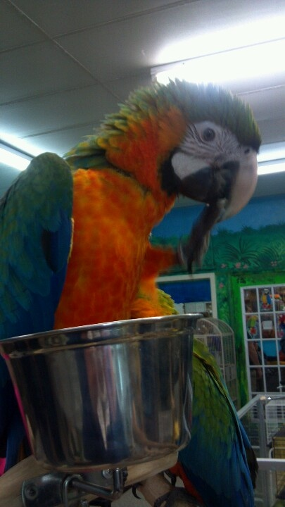 my favorite bird parrot essay