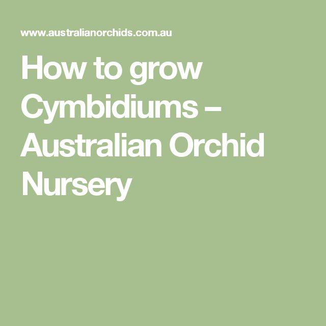 How to grow Cymbidiums – Australian Orchid Nursery
