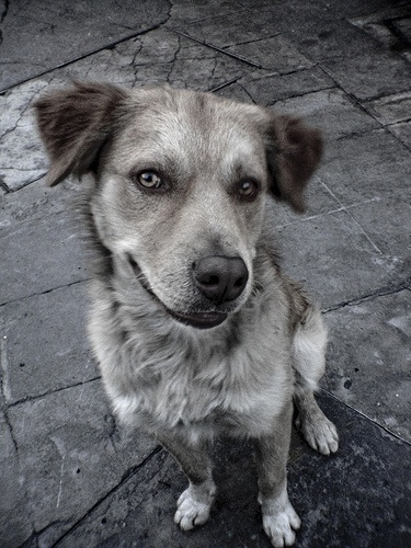 Perro callejero by Jolie W., via Flickr