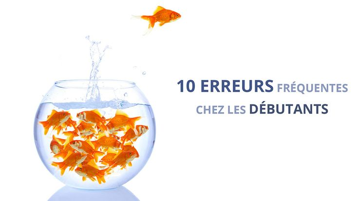 Best 25 poisson rouge aquarium ideas on pinterest for Poisson rouge nourriture vacances
