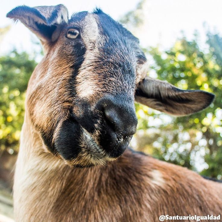 Un buen panorama para hoy y todos los días del año: Darle un espacio en nuestro corazón a todos los animales    #animalfriends #animalsofinstagram  #animallovers #happyanimals #animalloversonly #fridayfun #happyfriday #fridaymotivation #veganofig #vegan #govegan #friendsnotfood #animalrights #animalliberation #goat #goats #goatofinstagram #instalove #instalovers #instabeauty #instamood #inspiration