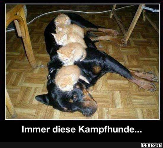Immer diese Kampfhunde.. | Lustige Bilder, Sprüche, Witze, echt lustig