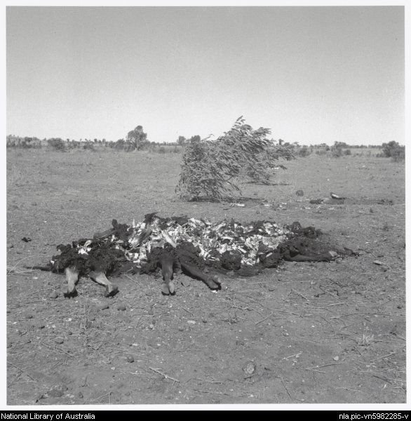 Nolan, Sidney, Sir, 1917-1992. Remains of cattle, Queensland, 1952 [picture]