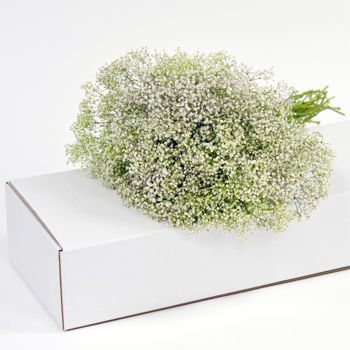 Baby's Breath (Gypsophila) Costco has an entire box for $130! Enough to do the whole wedding!