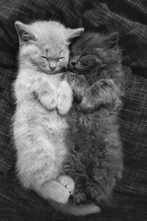 I don't like cats... but like... come on this picture is so adorable