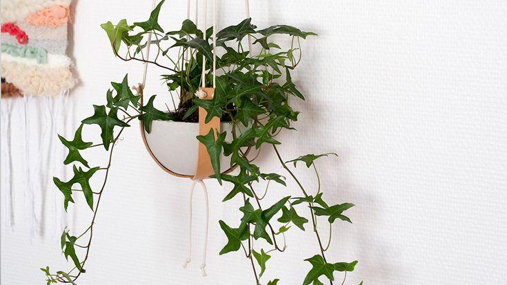 les 25 meilleures id es de la cat gorie lierre sur pinterest chambre jardin plantes fleurs. Black Bedroom Furniture Sets. Home Design Ideas