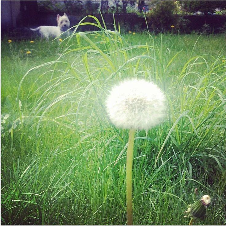 Praca w ogrodzie nie jest nam obca! Można zaczerpnąć inspiracje z natury i odetchnąć świeżym powietrzem. Sama przyjemność, szczególnie, gdy towarzyszy nam #Borys! #pracawogrodzie #wiosna #buzzmedia #rekomendujto